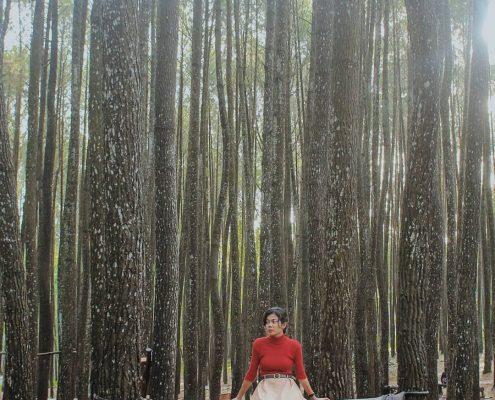 hutan pinus mangunan dlingo